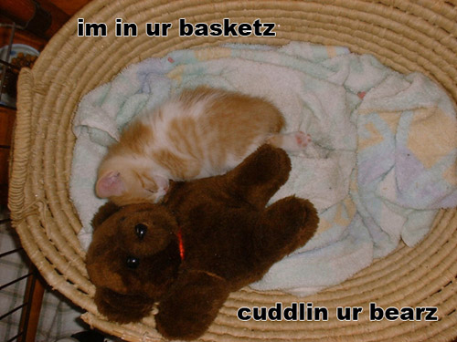 im in ur basketz cuddlin ur bearz