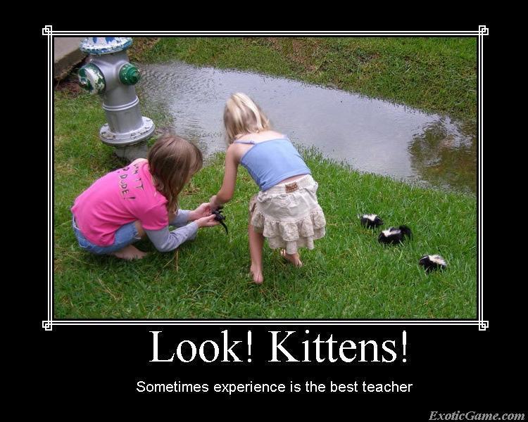 Look! Kittens!