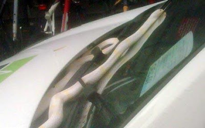 Snake pictured slithering across car windshield