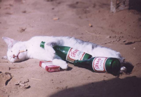 Cat Passed Out On Beer and Cigarettes