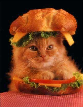 Cat Croussant Sandwich