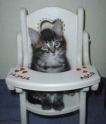 Cat Sitting in a Highchair