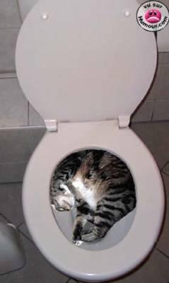 Toilet Bed