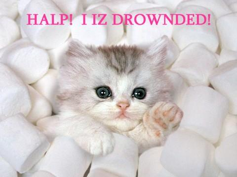 Halp i is drownded