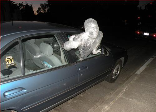 Man Wrapped in Plastic Sticking Head Out of the Window