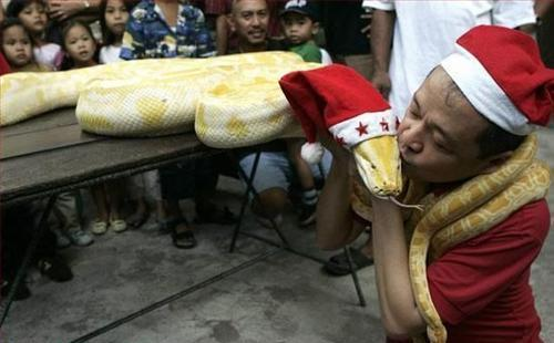 Santa Snake Getting Kissed