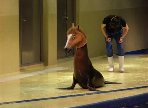Seal With Horsehead