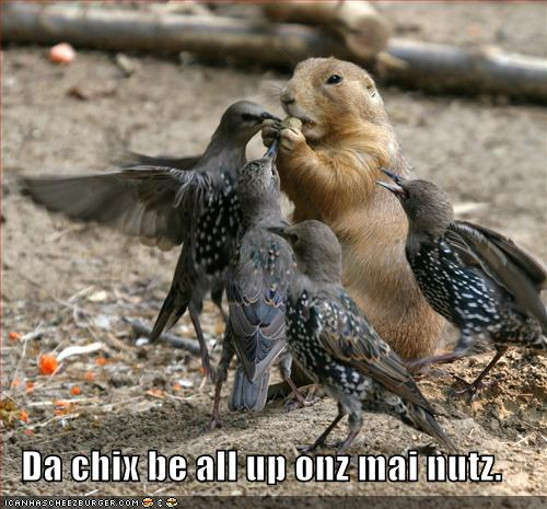 Da chix be all up onz mai nutz