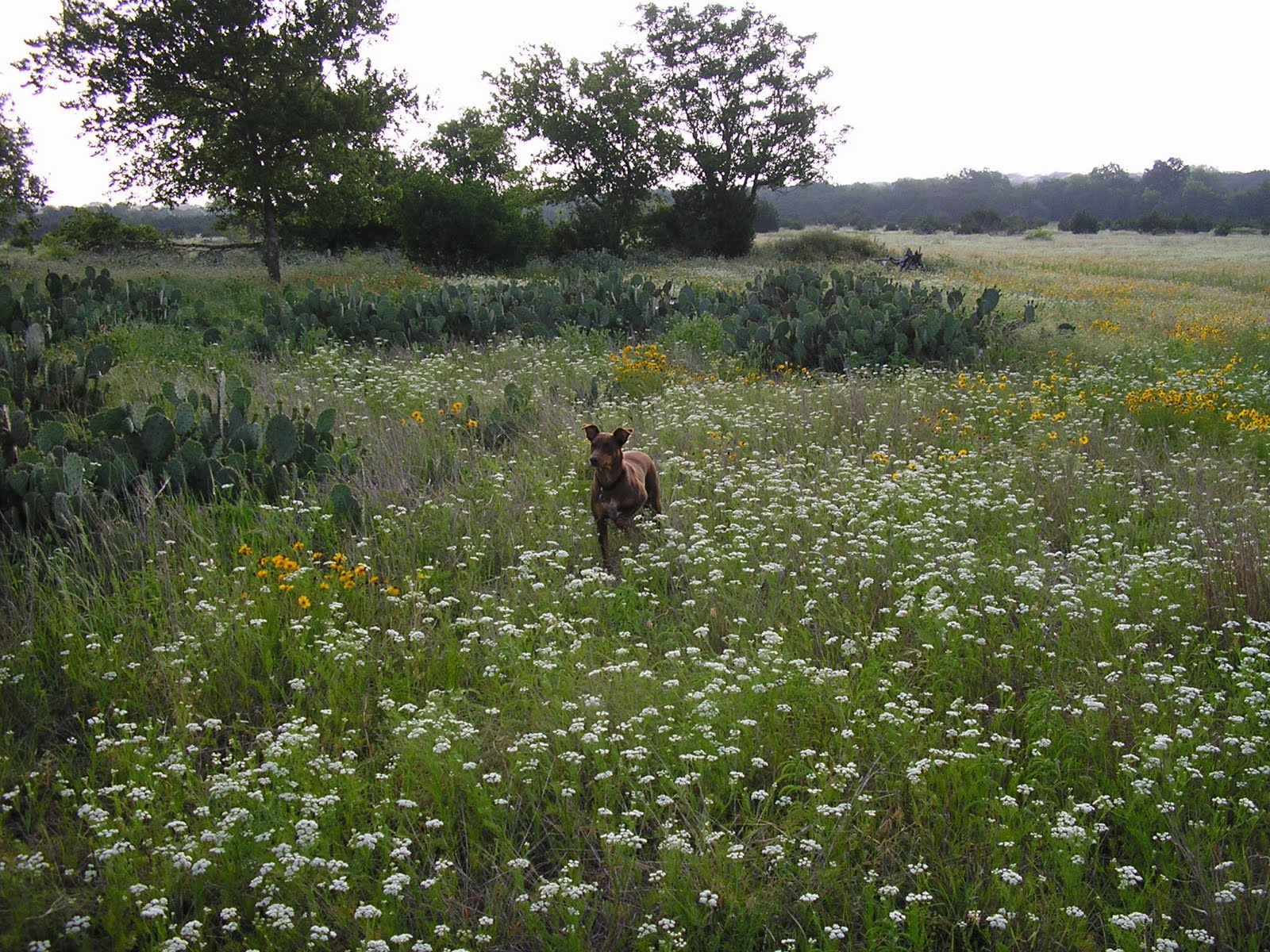 Cute Dog in a Field