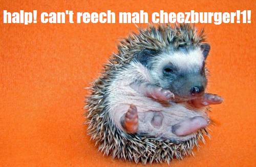 halp! can't reech mah cheezburger!1!