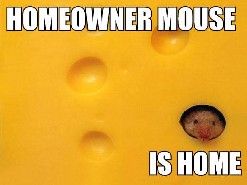 HOMEOWNER MOUSE IS HOME