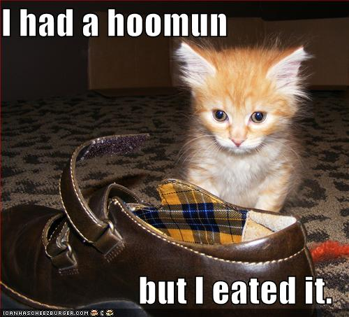 I had a hoomun but I eated it