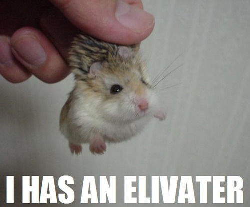 I HAS AN ELIVATER