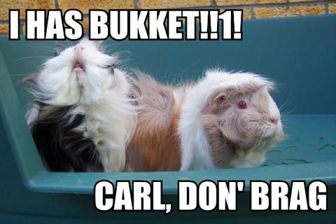 I HAS BUKKET!!1! CARL, DON' BRAG