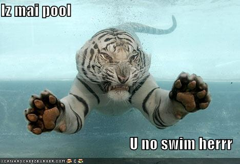 Iz mai pool U no swim herrr