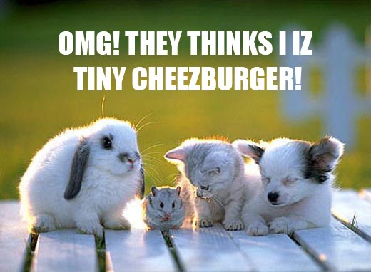OMG! THEY THINKS I IZ TINY CHEEZBURGER!
