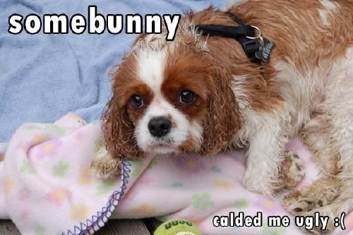 somebunny calded me ugly