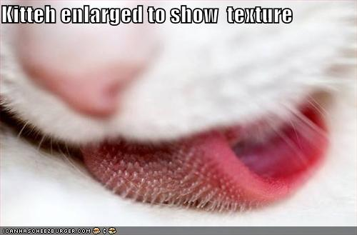 kitteh enlarged show texture