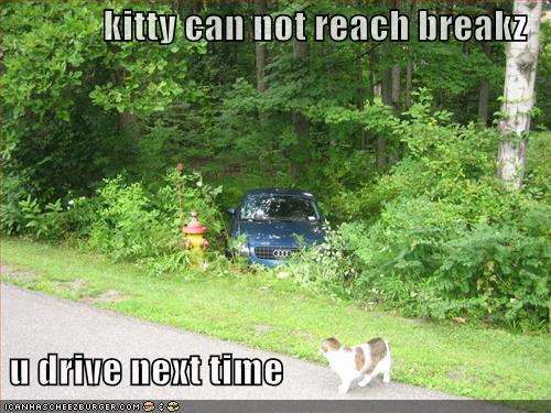 kitty can not reach breakz u drive next time