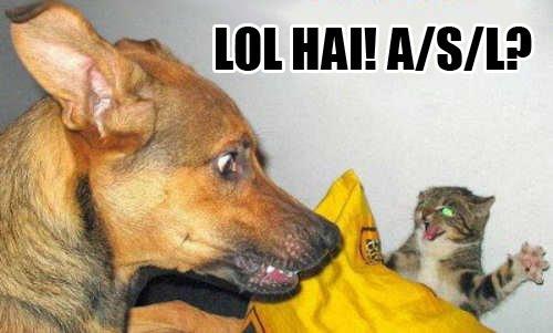 LOL HAI ASL