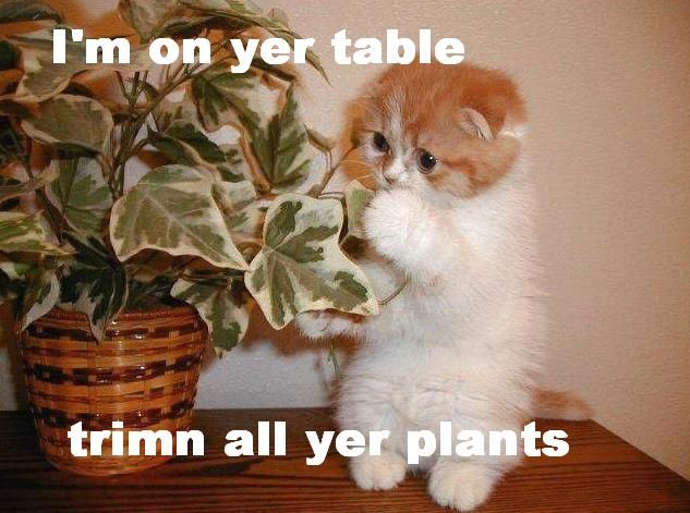 Im on yer table trimn all yer plants