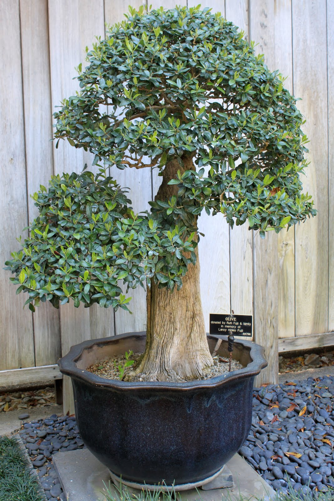 Living In The 39burbs Bonsai Show