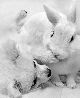 http://2.bp.blogspot.com/_taPC-1l2iog/Sgx8_M_LbNI/AAAAAAAB3Rg/s-GAKjtI37I/s400/cute+rabbits+flickzzz.com+6012-712795.jpg