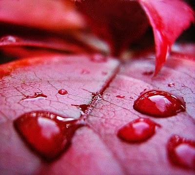 http://2.bp.blogspot.com/_taYBEJizfsI/TLkRi2A-yOI/AAAAAAAAAJk/T9gp6UaEmNM/s1600/hujan+darah+di+india.jpg