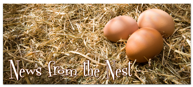 News from the Nest Blog Design