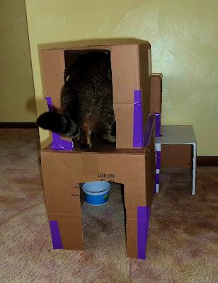 Kitty Condo, Second Floor