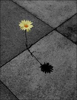 Flores No Concreto