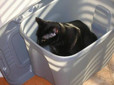 black cat in gray plastic storage bin
