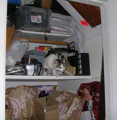 kitten in closet, before organizing