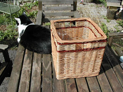 square basket with cat