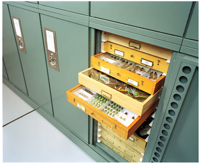 steel specimen cabinets with wood drawers