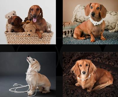 dachshund rescue calendar 2010