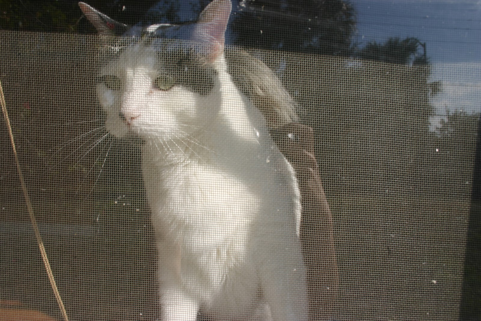 Cat Guards For Windows Guard in The Window Pane