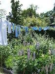 Jardins de couleur