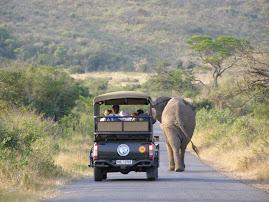 Elephant hunting!