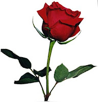 http://2.bp.blogspot.com/_thgeMKpc6NQ/TUUWa779BuI/AAAAAAAAAUk/OqPBWhLXaQ8/s1600/bgsingle_red_rose.jpg