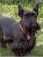 cementerio de mascotas virtual, perro fallecido Wagner