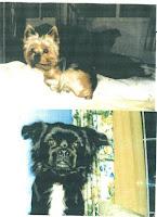 perros perdidos en Torrevieja Alicante