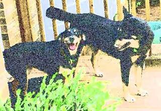 anuncios perros perdidos