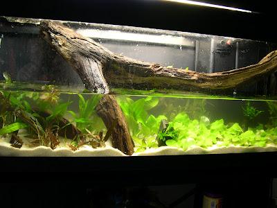 Eden aquarium allestimento di un acquario di 120 litri for Acquario 120 litri