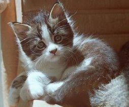 Bu site sevgili kedim Basri'ye adanmıştır