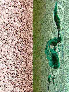 Half-Grassed (c) David Ocker