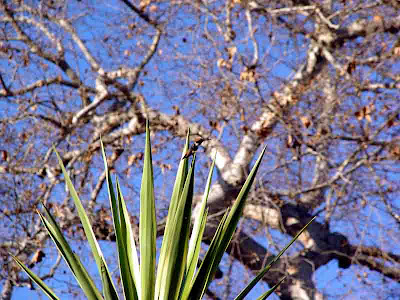 Somewhere in this picture is a Hummingbird  Can YOU find Waldo?