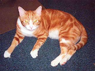 OJ on a rug mid nineties