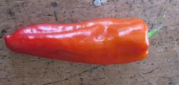 carrot!