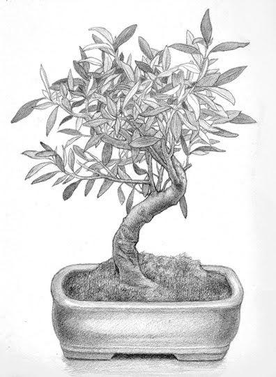 Lucie geffr dibujo de un bonsai drawing of a bonsai - Dessin bonzai ...